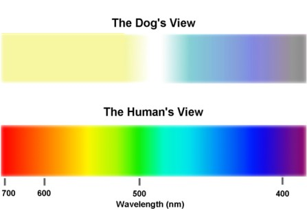 dog and human light spectrum
